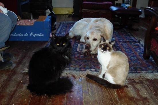 Max et ses chats