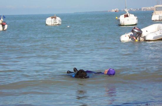 Chien de sauvetage en mer